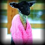 LiLLo - Cold Easter 07042015